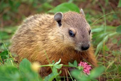 Groundhogs Day Activités pour le troisième niveleuses