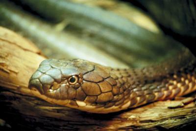 Quels sont un Predators de Python?