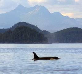 Quel est le plus petit Dolphin?