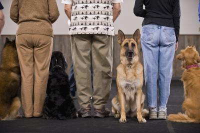 German Shepherd Cadeaux Amant