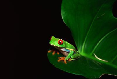 Cinq faits sur Rain Forest Frogs