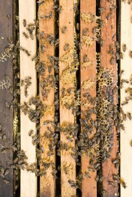 Comment nourrir les abeilles
