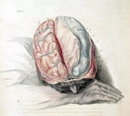 Information sur les différentes parties du cerveau