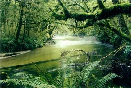 Rainforest écosystème de l'information