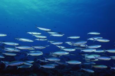 Pourquoi les poissons ne mordent pas bien Quand le niveau d'eau est faible?