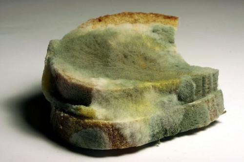 Comment fonctionne la croissance des moisissures sur le pain?