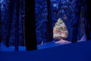 Comment accrocher les lumières dans un arbre