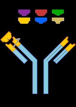 Définitions des antigènes et des anticorps