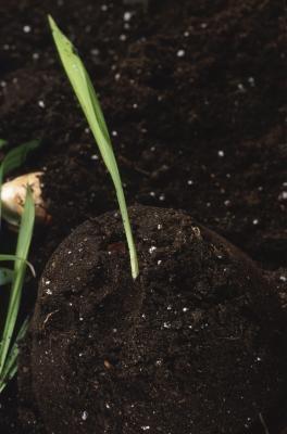 Projets scientifiques sur les algues