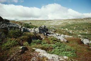 Comment un Tundra Biome est important de l'écosystème?
