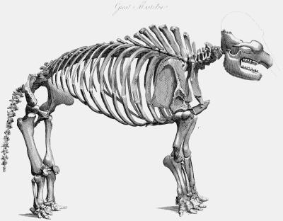 Les os de dinosaures trouvés dans Hemet Valley, Californie