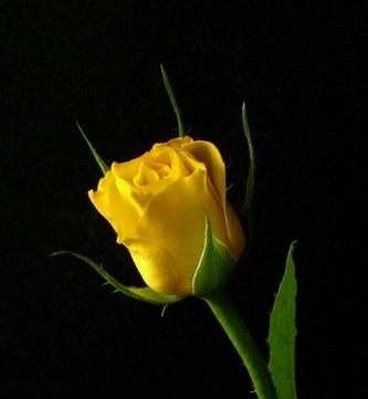 Quelle est la fleur du mois en Juin?
