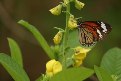 Comment garder les papillons vivants