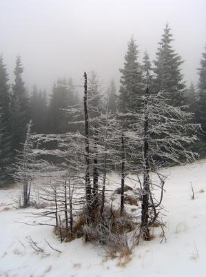 Les meilleurs Conditions météo Hunt Coyotes