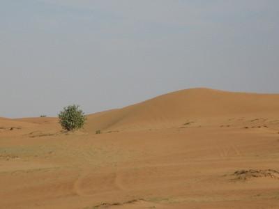 Comment les plantes du désert Adapt?