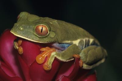 Comment comparer la biodiversité de Tempéré Forêt biomes Avec la forêt tropicale biomes