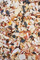 Comment traiter Coquillages trouvés dans l'océan