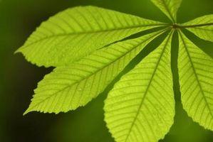 Quels sont les deux principaux réactifs utilisés dans Photosynthèse?