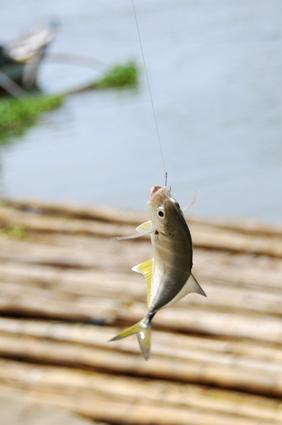 Comment attraper un poisson-chat sur Rapala Pro Fishing