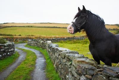 Le Western Snowberry Toxique pour les chevaux?