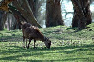 Deer Hunter 2005 Conseils de chasse