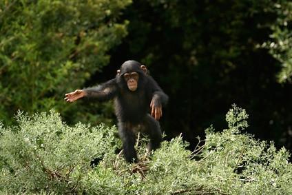 Espèces en danger dans la forêt tropicale Biome
