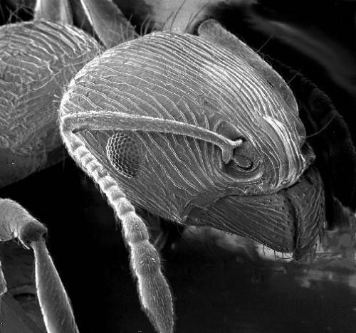 Quand at-on le microscope électronique Inventé?