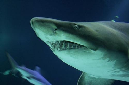 Comment faire pour trouver des dents de requin à la plage