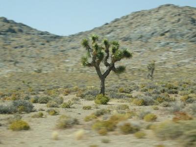 Quel type de plantes se trouvent dans le désert?