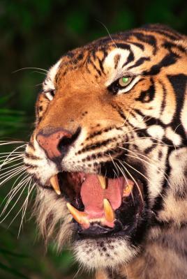 Quels organismes sont responsables pour la résolution d'une des espèces en péril?