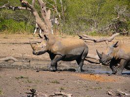Quel est l'habitat naturel de Rhinoceros?