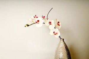 Comment arranger les fleurs de mariage pour la réception