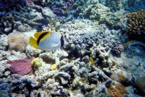 Faits sur les récifs