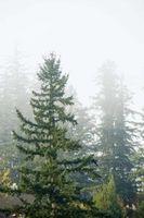 Description d'une forêt de conifères