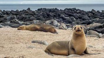 Différence entre les phoques et lions de mer