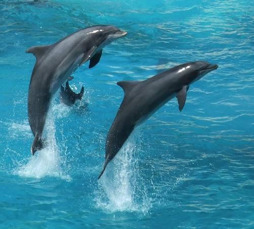 Comment les dauphins importantes pour les êtres humains?