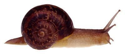 Quelle est la structure de langue en forme que certains utilisent Mollusques pour l'alimentation?