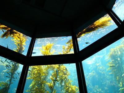 Adaptations des plantes Ocean