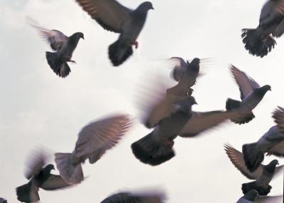 Quelles espèces de oiseaux Builds Twig Nids