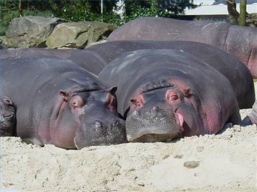 Combien coûte un Hippo Peser?