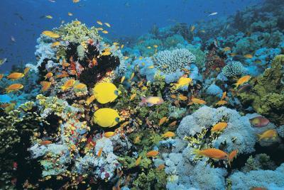Liste des plantes de l'océan sous-marin