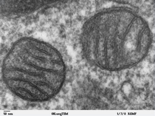 Comment identifier les structures cellulaires