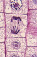 Quels sont les cinq choses qui composent une structure cellulaire?