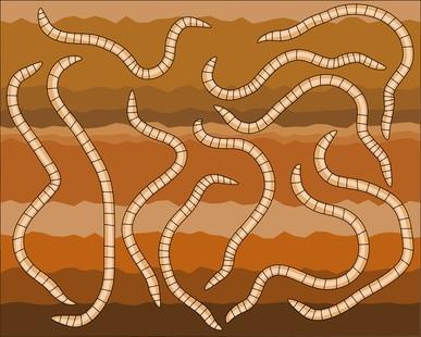 Comment élever Worms rouges pour la pêche