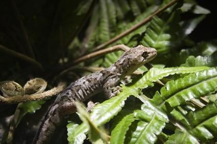 Comment augmenter l'humidité dans un Gecko Vivarium