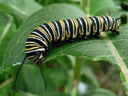 Comment nourrir les papillons
