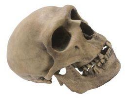 Comment faire un crâne pour la science