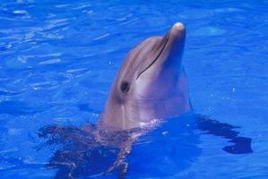 Dolphin Gâteau Idées